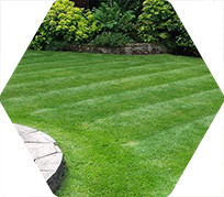 A freshly cut lawn with stripes