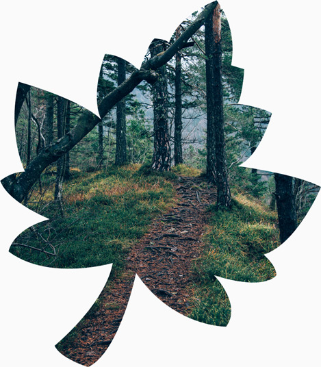 The leaf part of the logo with image of forest