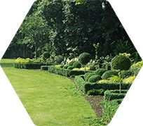 A garden with topiary bushes